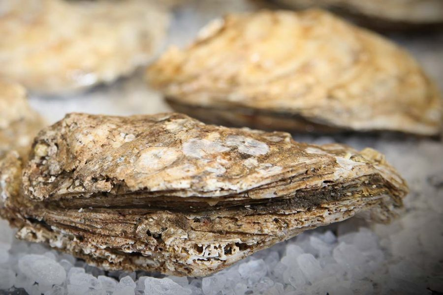 Foodservice Oysters